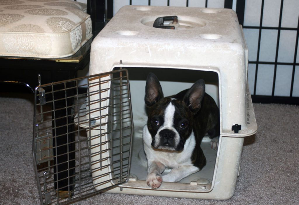 Dog Training Crates For Housebreaking